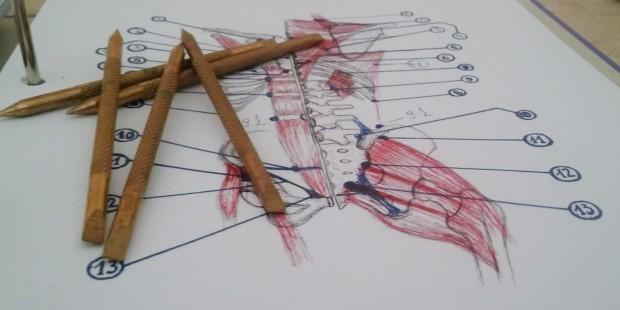 Pinoterapia w Rzeszowie