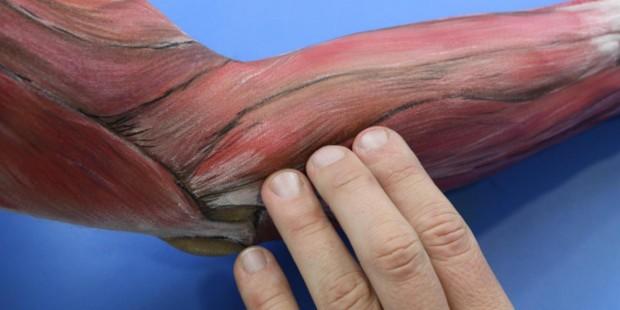 Anatomia palpacyjna Rzeszów